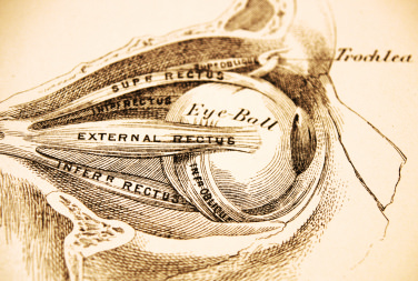 Antique Medical Illustration - Eyesocket Profile -Ophthalmology Billing