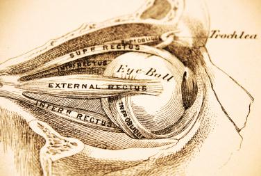 Antique Medical Illustration - Eyesocket Profile -Ophthalmology Billing